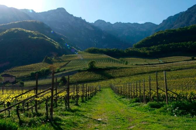 I vignaioli dell'Alto Adige nella capitale