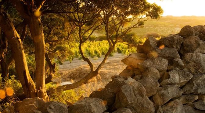 La Sardegna vinicola di Dettori