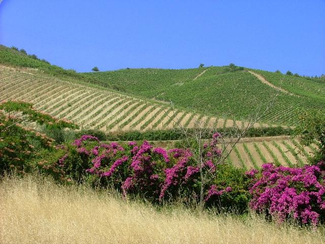 Dalla Calabria con sapore