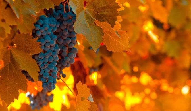 Corso sulla conoscenza e la degustazione del vino