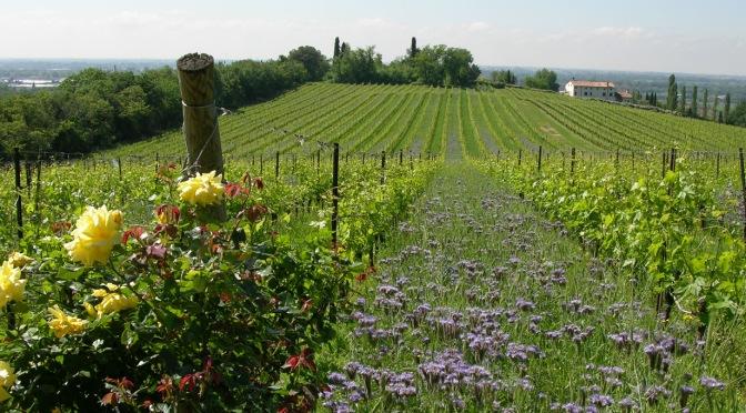 Amarone…travolgente passione: Musella