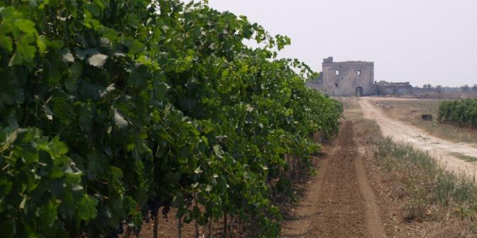 Puglia d'autore: Leone de Castris e i formaggi de La Tradizione