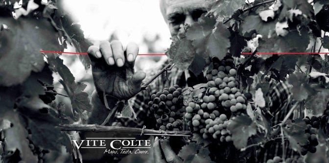Vite Colte: L'incantevole sinfonia del Nebbiolo e i tesori dell'artigianato caseario piemontese