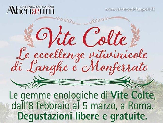 Vite Colte: Le Eccellenze Vitivinicole di Langhe e Monferrato