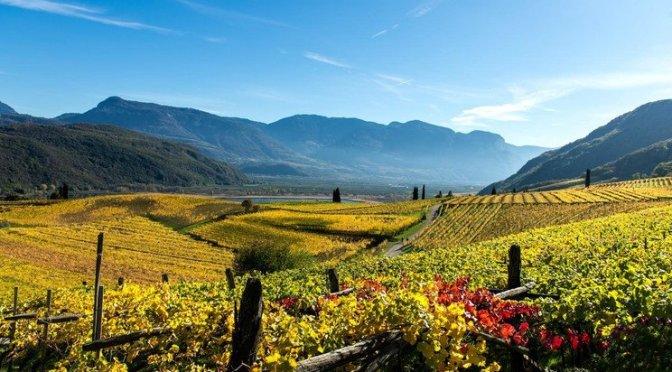 Piccoli, grandi viticoltori dell'Alto Adige