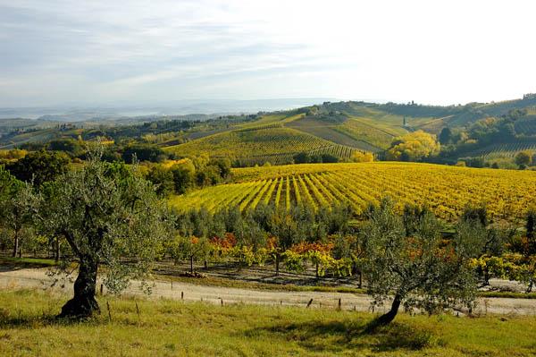 Entusiasmanti sorsi di Toscana