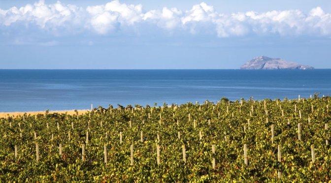Scarlatte emozioni di Sardegna. I capolavori di Santadi e di Agricola Punica