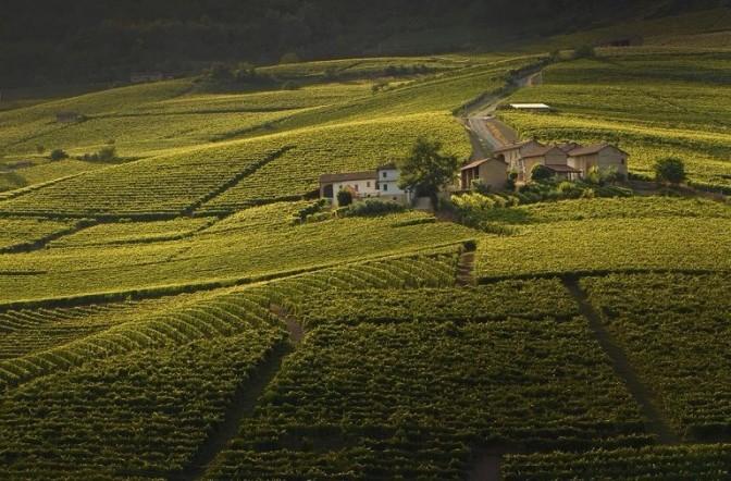 Incantevoli sorsi di Langhe e Monferrato
